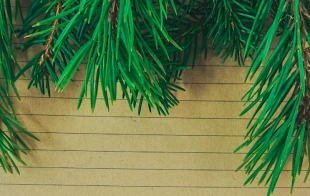 Pine - Plantation to Paper