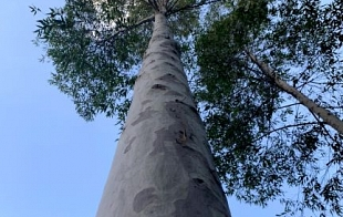 Spotted Gum Forestry Story