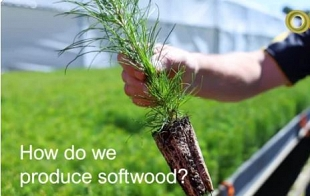 ForestLearning InFocus - How Do We Produce Softwood?